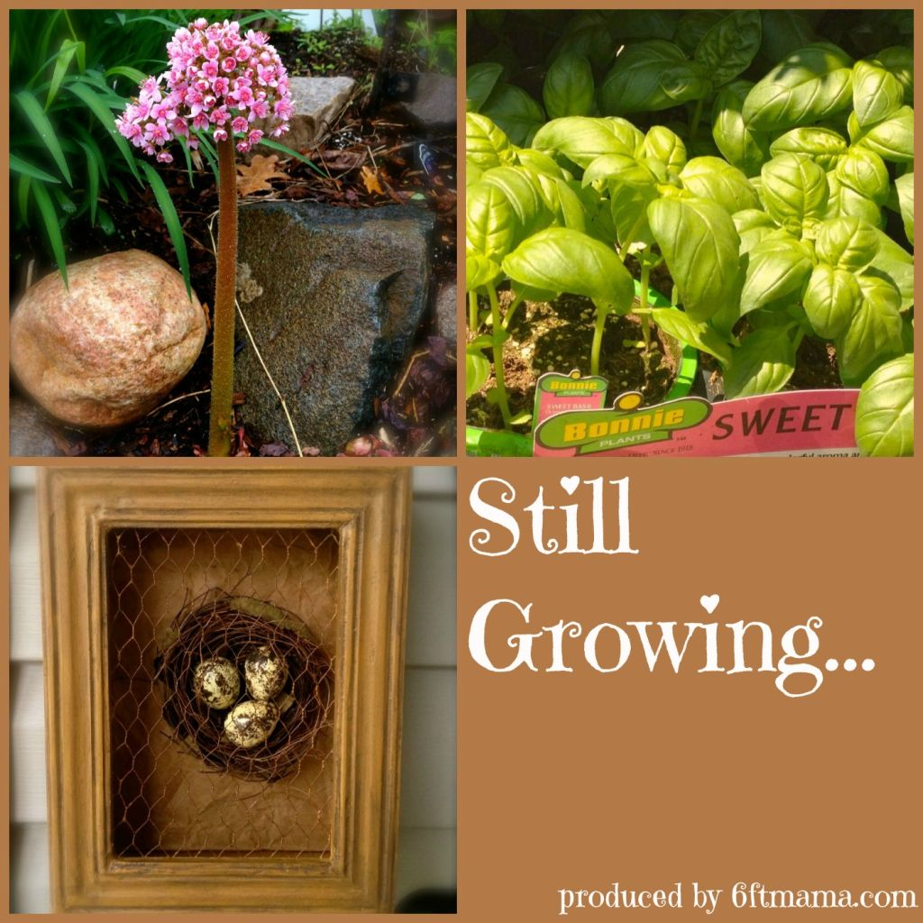 Still-Growing-Album-Cover1
