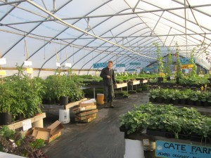Tomato Greenhouse Cate Farm Business