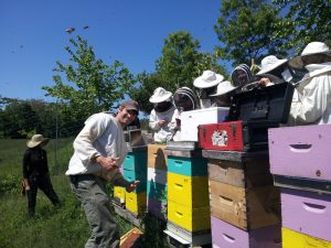 Farm NYC bee course